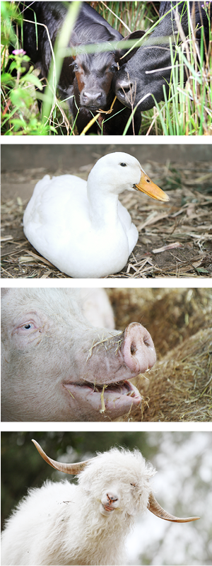 Can-you-help-Farm-Animal-Rescue