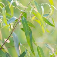 MBRC-plants-100-trees
